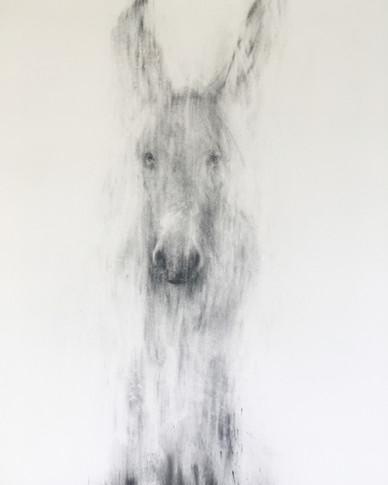 JAKOB 2018 Charcoal on cotton paper 150 x 120cm