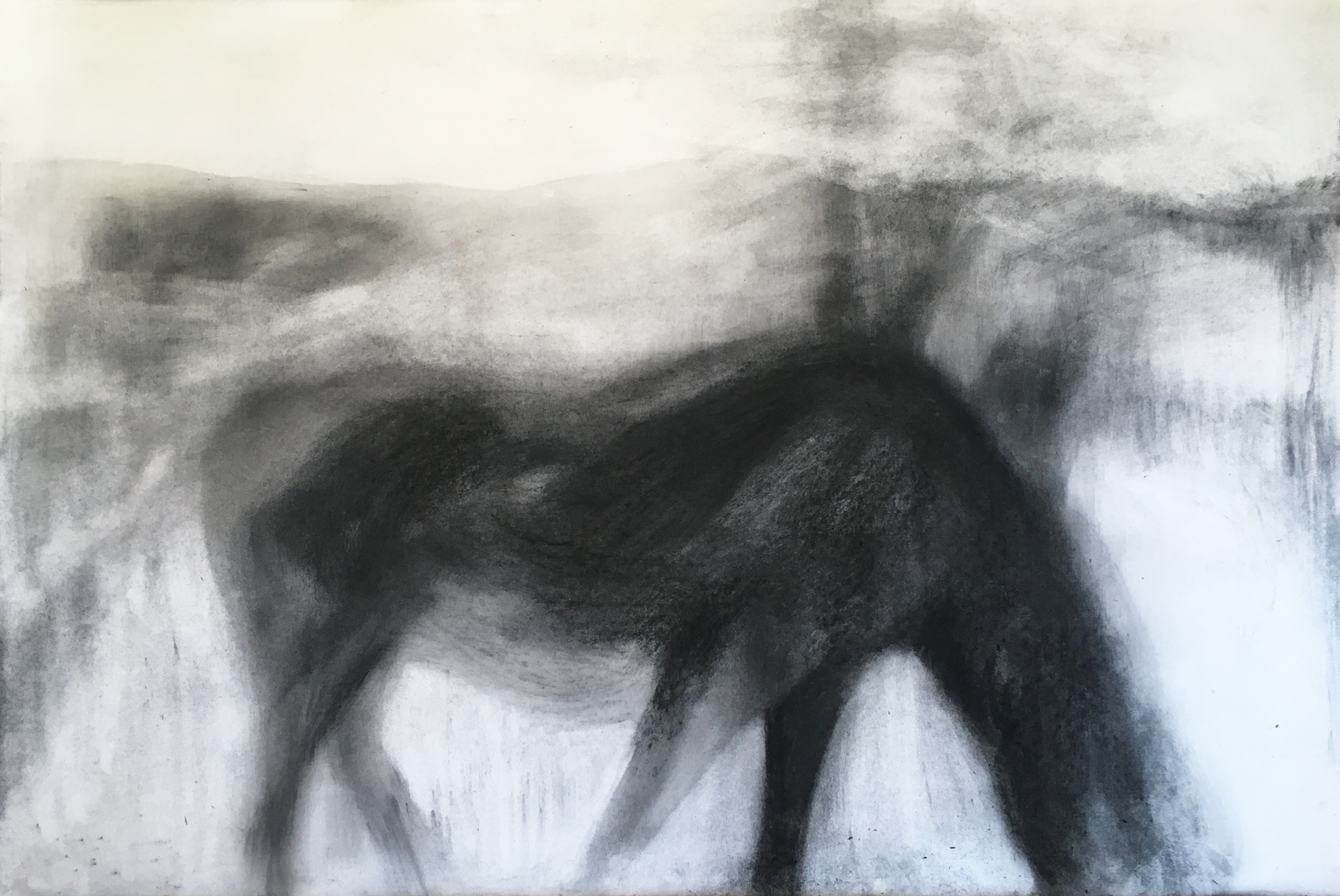 GRAZING 2018 Charcoal on cotton paper 70 x 100cm