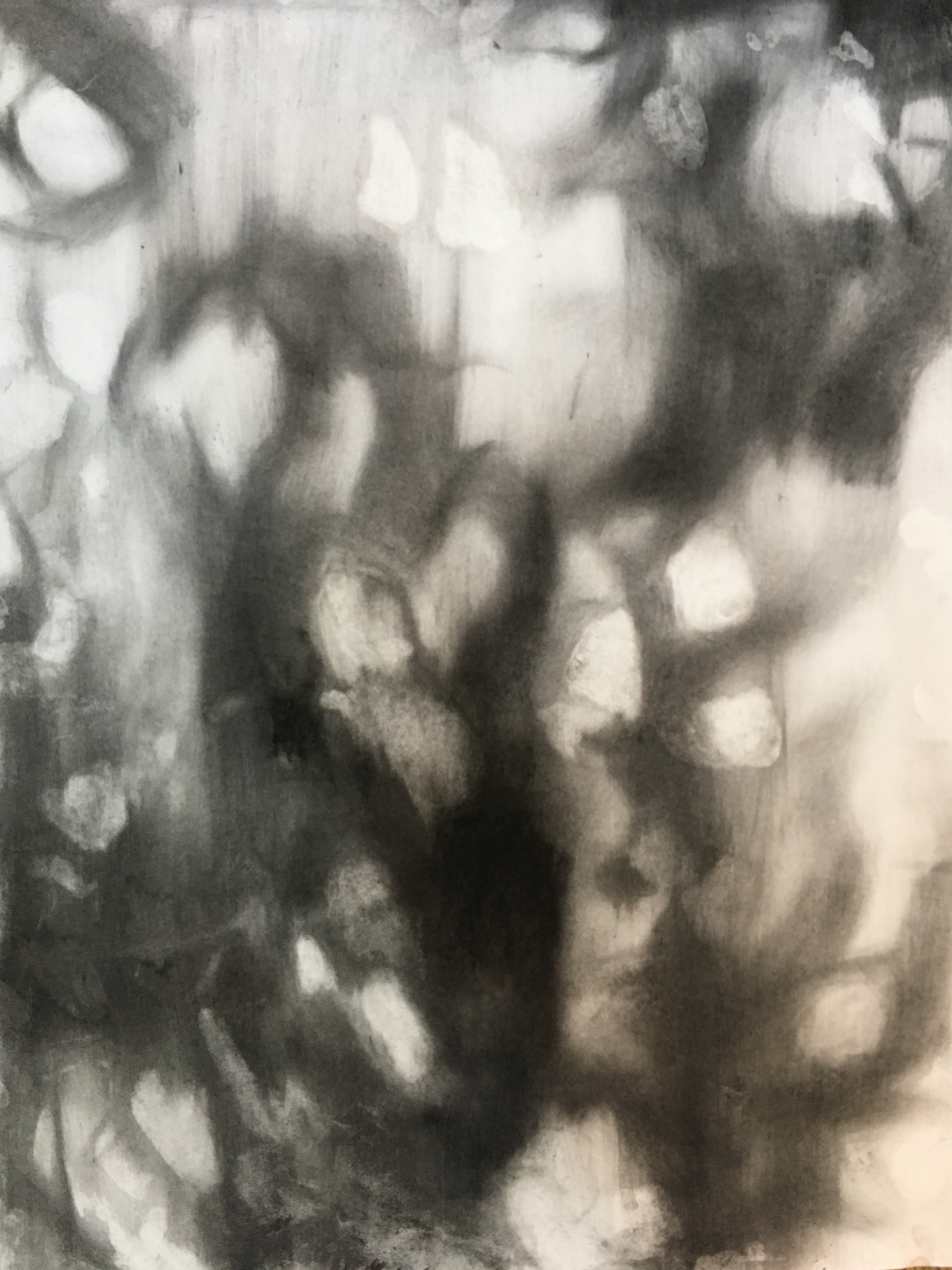 ONDER DIE BOME 2019 Charcoal on cotton paper 65 x 50cm