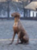 Dog Statue.jpg