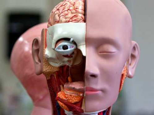 IGCSE Human biology