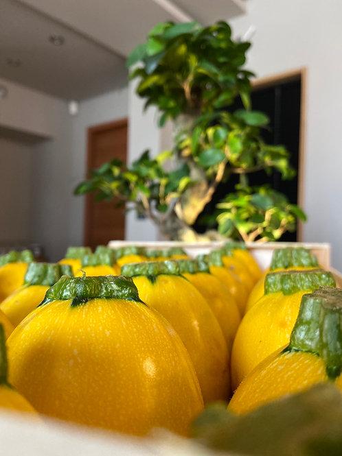 Courgettes jaunes