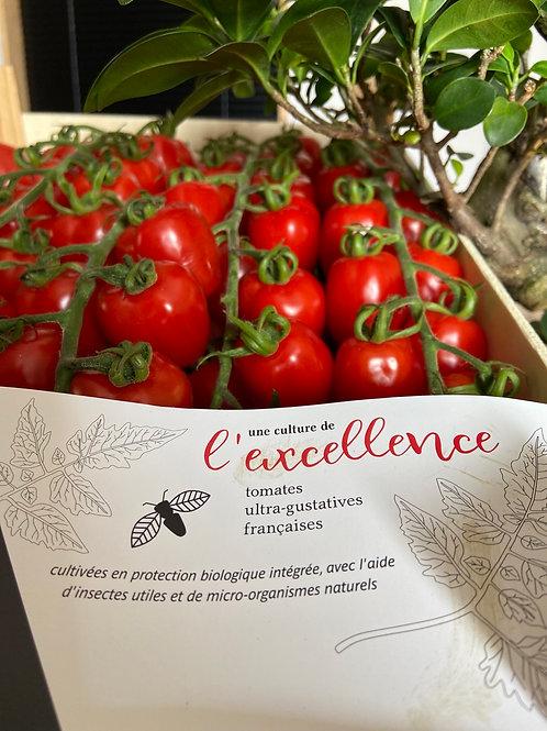 Tomates d'exception Jouno