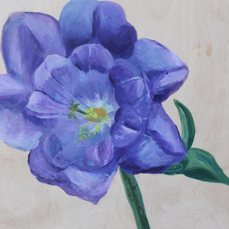 Bell Flower Wonder