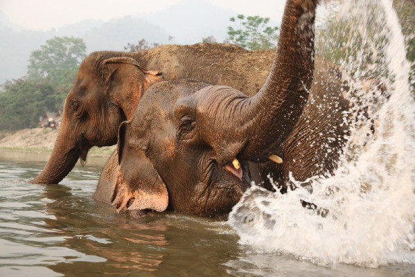 Elephant Retreat $500 Discount Ends This Saturday