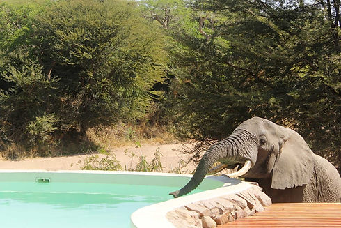 Swimming Pool Elephant Ruaha Tanzania