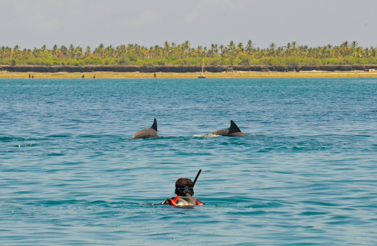 Tanzania Fanjove Island Swimming with dolphins