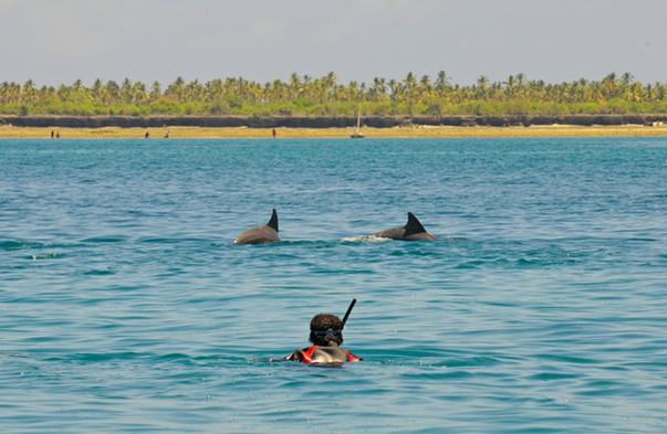 Tanzania Fanjove Island Swimming with Doplhins
