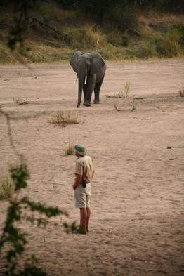 Expert guided walks in Jongomero Ruaha Tanzania