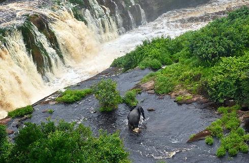 Elephant Kougou Falls Ivindo Gabon