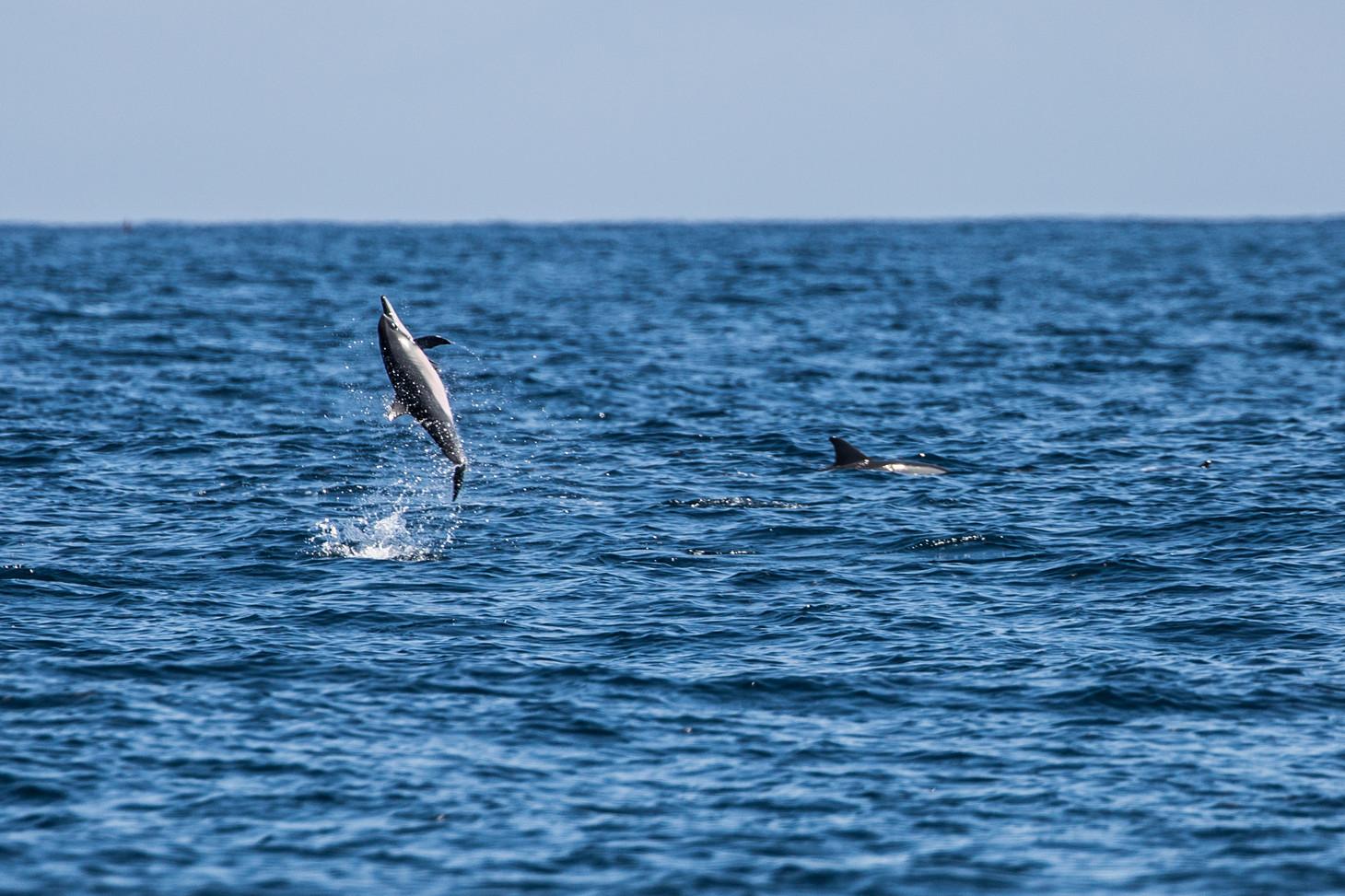 Tanzania - Fanjove Island - Dolphinshin spin