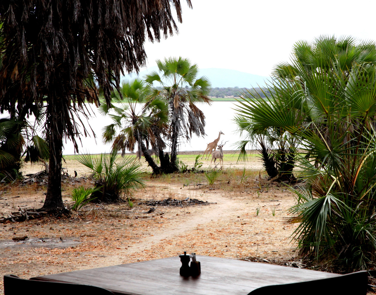 Share your breakfast with friends at Siwandu, Nyerere, Selous