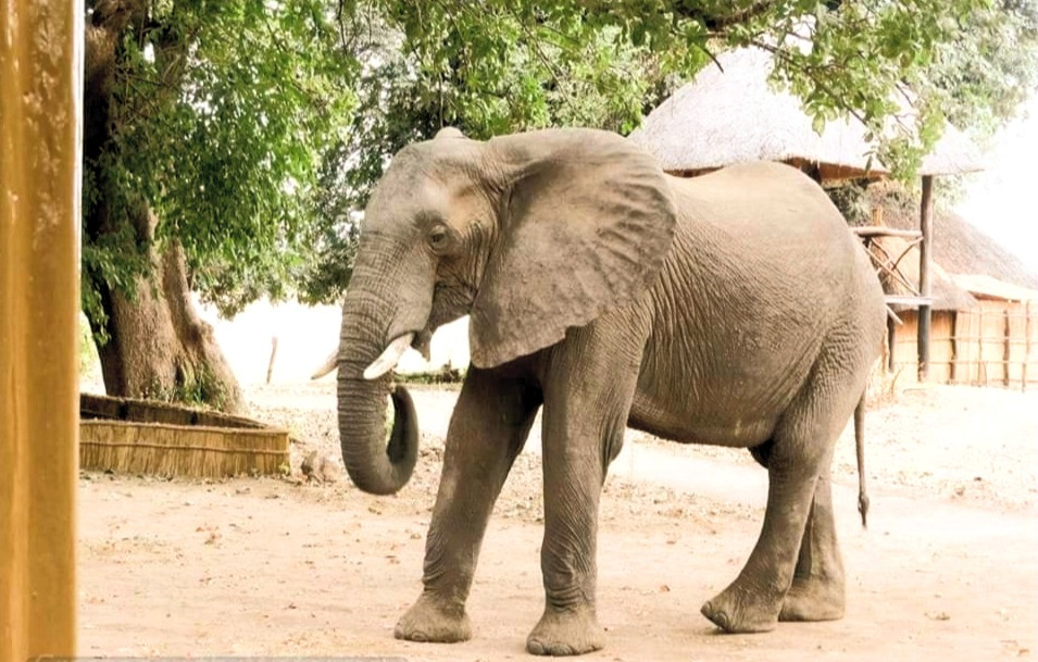 Zikomo Camp Elephant