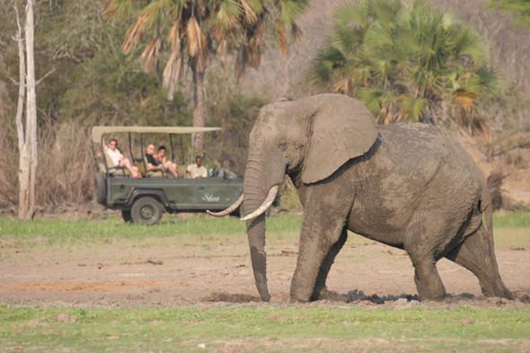 4x4 Game Drive Nyerere Selous Tanzania
