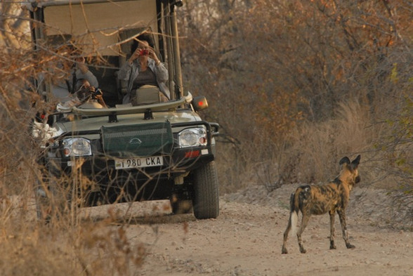 Drive Safari Jongomero Ruaha Tanzania