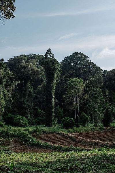 Sao Tome Fertile Soil Plantations