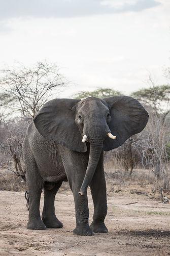 4 night safari package Nyerere Ruaha Tanzania