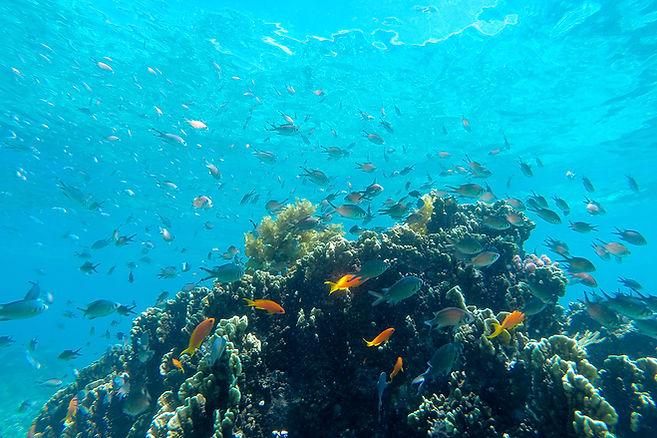 Diving Fanjove SongoSongo Archipelago Tanzani Indian Ocean