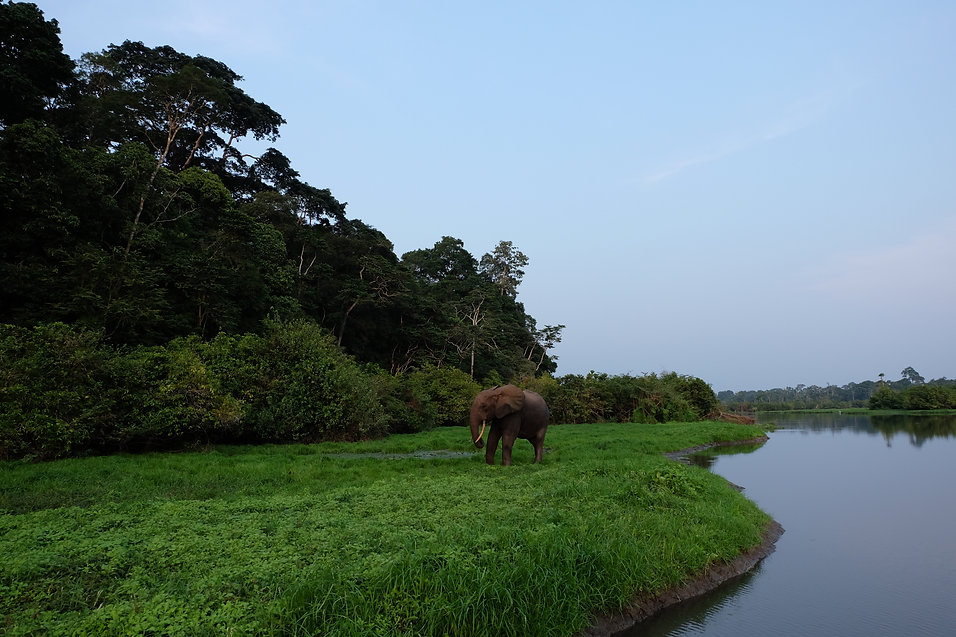 Loango Lodge Rates Packages Gabon