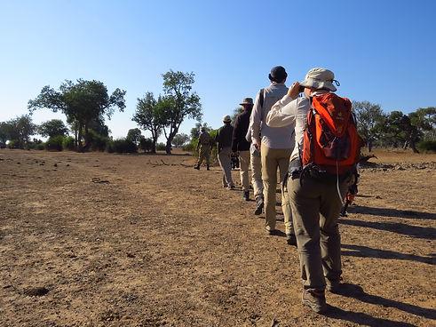 Walking Safari Excursions Luangwa Zikomo Zambia