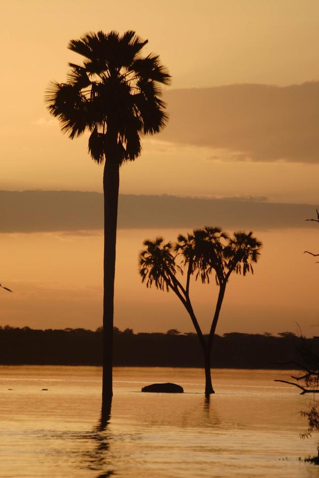 Iconic palms of Lake Nzerakera, Nyerere, Selous