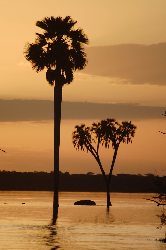 Iconic palms of Lake Nzerakera, Nyerere, Selous