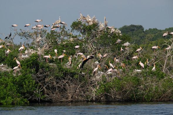 Bird Island Loango Gabon