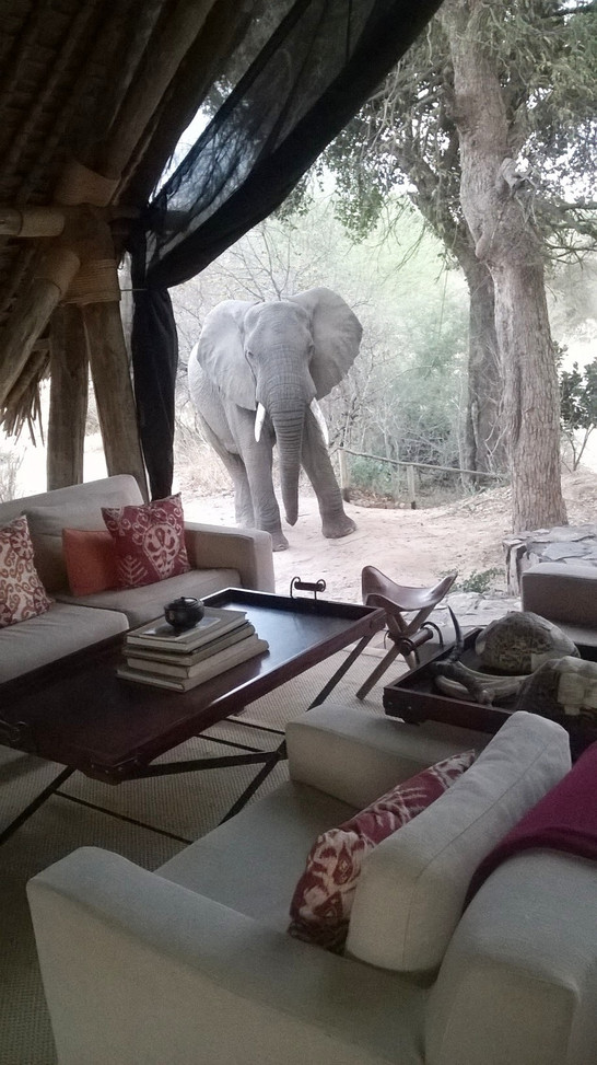 Bob the Friendly Camp Elephant at Jongomero, Ruaha
