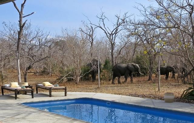 South Camp swimming pool with friends, Siwandu, Nyerere, Selous