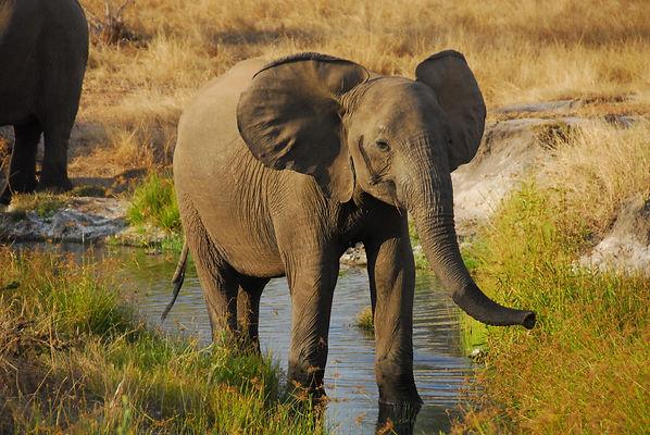 Morning Safari Luangwa Zikomo Zambia