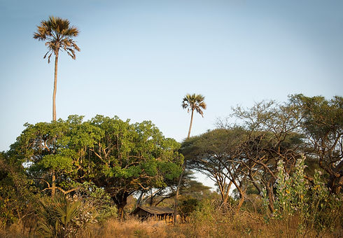 Chada Camp Katavi National Park Tanzania