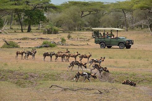 Nyerere Tanzania Game Drive Widl Dogs