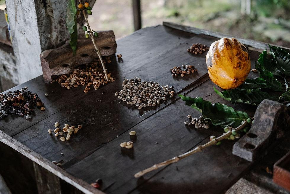 Chocolate Cacao Coffee Plantations Príncipe