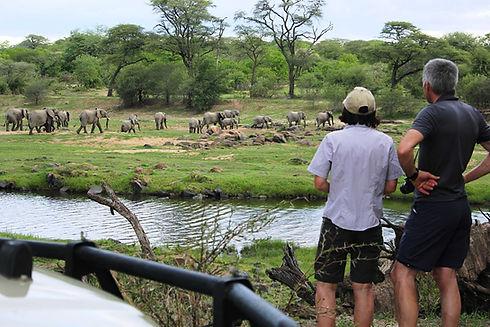 Ruaha Safari Elephants Tanzania