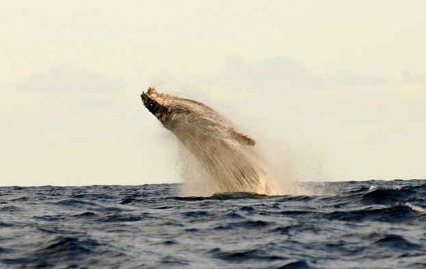 Tanzania Fanjove Island Whale watching