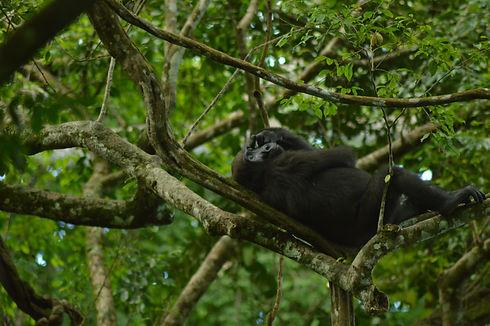 Gorilla Trek Loango Gabon