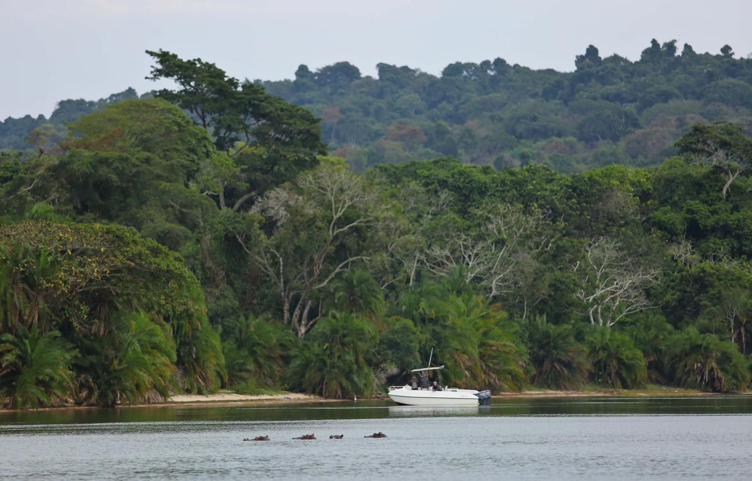Hippo Spotting from the Boat Rubondo Chimp Island Tanzania