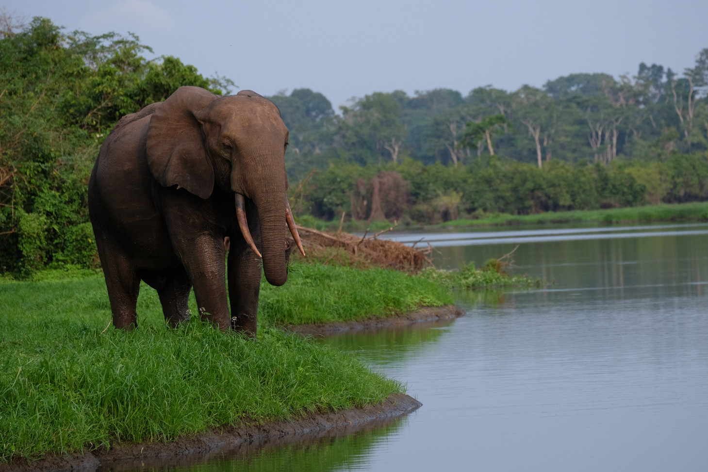 Akaka Landscape and Elephant Viewing from Boat Safari