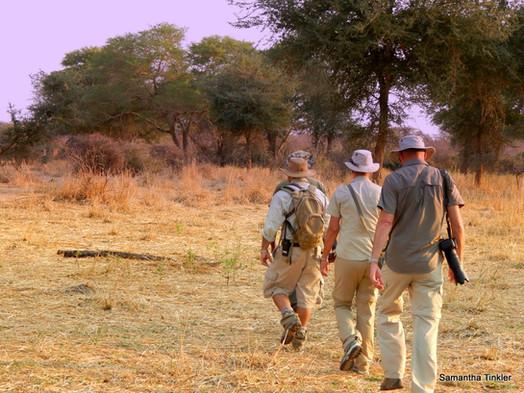 Jongomero Ruaha Walking Safari Tanzania