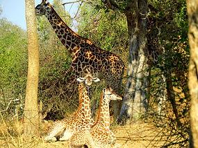 4 Night Zikomo Package Luangwa Zambia