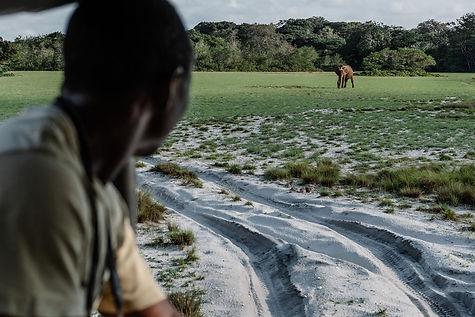 4x4 Safari Loango Gabon