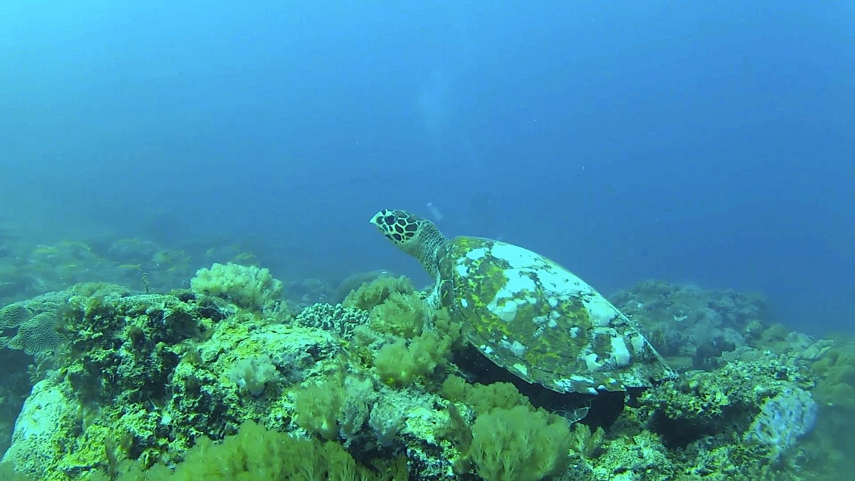 Tanzania - Fanjove Island - turtle