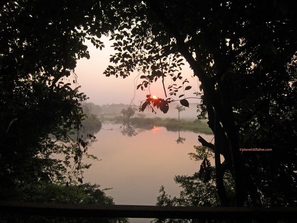 View from Akaka Camp Loango Gabon.JPG