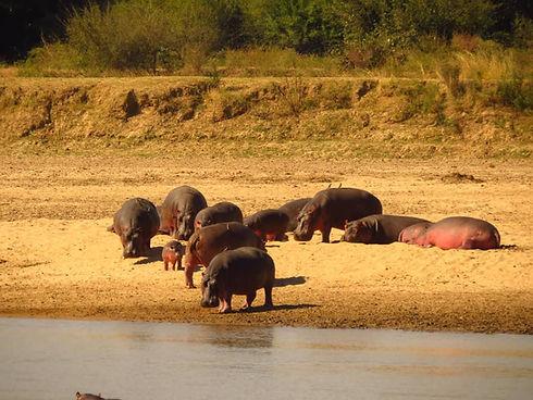 Luangwa Valley South Zikomo Zambia