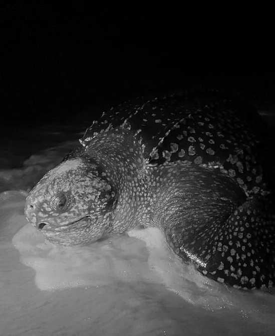 Turtle Pongara Lodge Packages Gabon