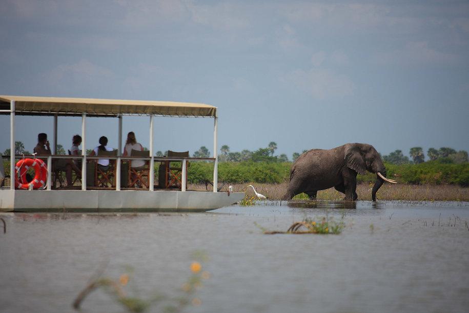 Close game viewing from Siwandu Nyerere Tanzania