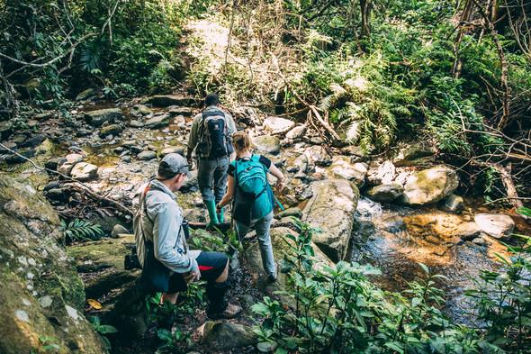 Tracking Chimpanzees Greystoke Mahale Tanzania