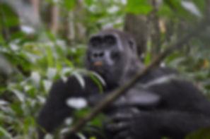 Travel Gabon Tanzania Zambia Remote Exclusive Safaris