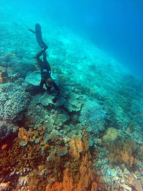 Tanzania Fanjove Island Snorkeling
