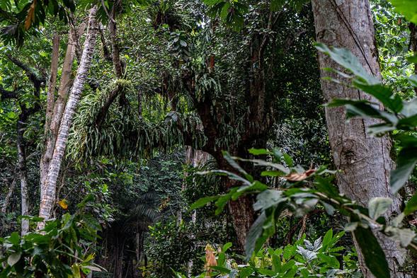 Rainforest Sundy Praia